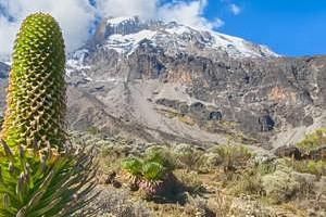 Kilimajaro Rongai Route