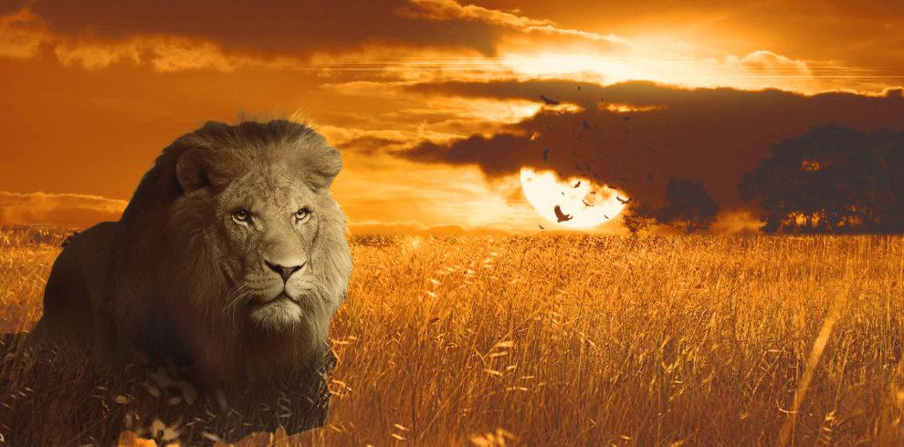 LION-WARM